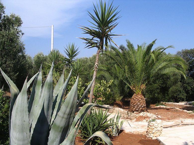 thumb_403_img1578.jpg giardino