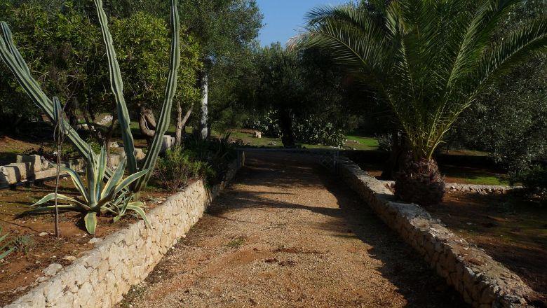 thumb_403_p1190555.jpg giardino circostante